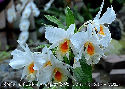 Glória Ishizaka -   Kyoto Botanical Garden 2012 - 23