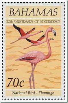 bahamas-flamingo