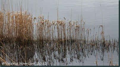 14-reeds