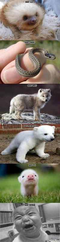 Baby Animals vs Baby Humans via 9GAG