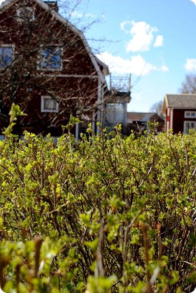 trädgården 28 april 2012 025