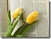 Kozzi-holy_bible_and_tulips-1774x1183