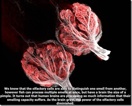 10_interesting_facts_about_smelling_640_10