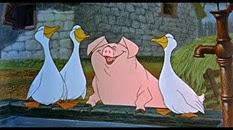 24 le cochon