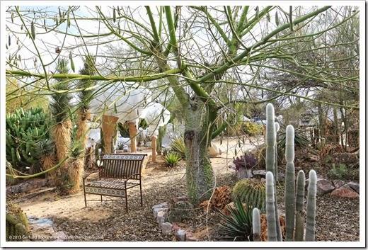 141231_Tucson_Bachs_0049