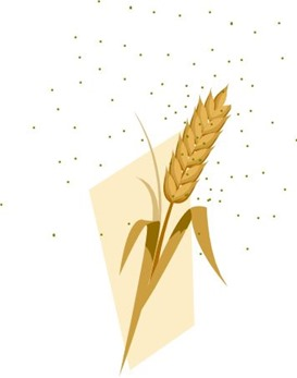 Wheat pollen