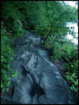 Fallingwater & Ferncliff walk 201