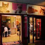 cat store at muscle park in tokyo in Odaiba, Tokyo, Japan