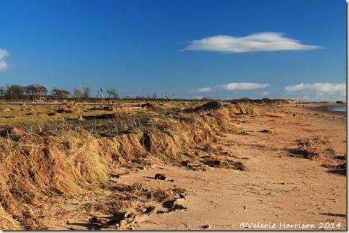 32-damaged-dunes