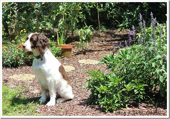 henry garden