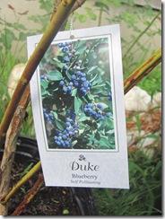 blueberriesduke1