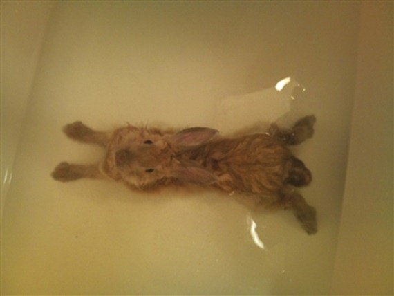 Nala the Bathing Bunny