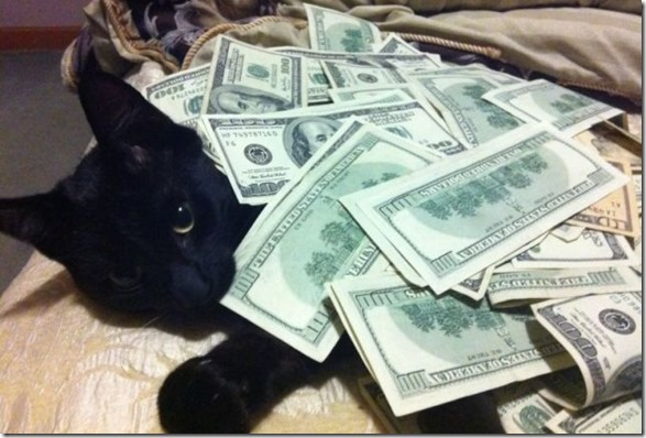 rich-wealthy-cats-13