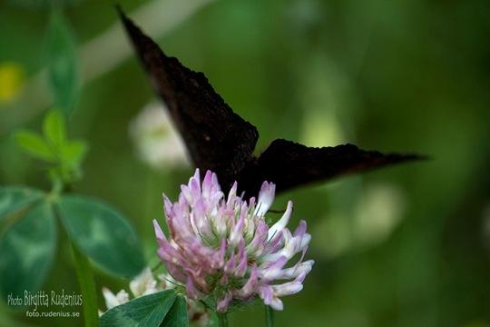 butterfly_20110730_bye