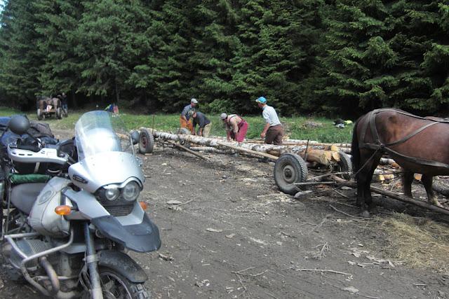 חוטבי עצים על הדרך.jpg