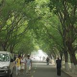 Qingdao - Badaguan - À l'ombre des feuillages