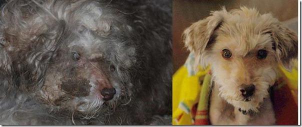 Animais Antes e Depois do Resgate (9)