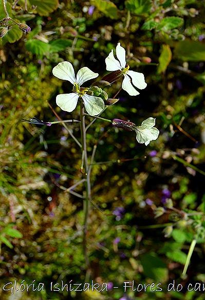 Glória Ishizaka -flor  16