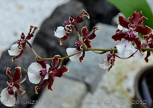 Glória Ishizaka -   Kyoto Botanical Garden 2012 - 20