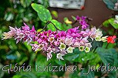 Glória Ishizaka - Jardim Botânico Nagai - Osaka 43