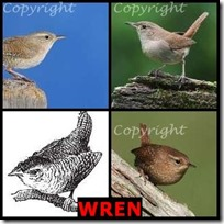 WREN- 4 Pics 1 Word Answers 3 Letters