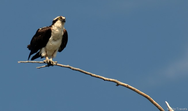 love that osprey
