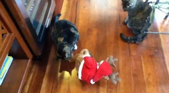 gato brincando Natal