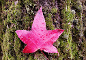 mossy-tree-and-red-leaf-by-zero-dean.jpg