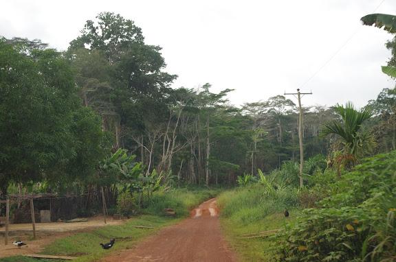 La piste d'Ebogo (Cameroun), 9 avril 2012. Photo : J.-M. Gayman