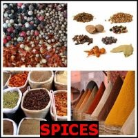 SPICES- Whats The Word Answers