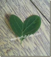 heart shaped malunggay leaf