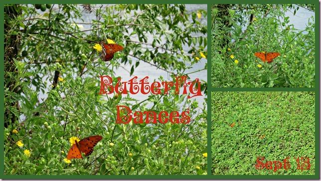 ButterfliesIP