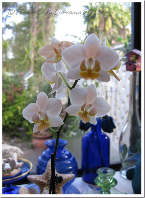 03-14-f-p-orchid
