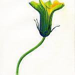 pumkinflower.jpg