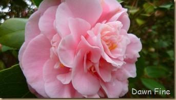 Sandhill Horticultural Garden_035