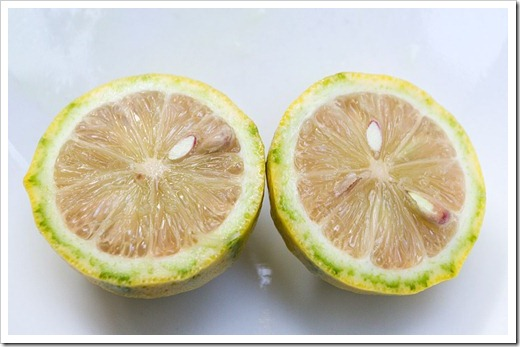 120919_variegated-Eureka-lemon_11