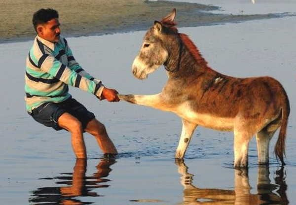 8- Dar com os burros n'água