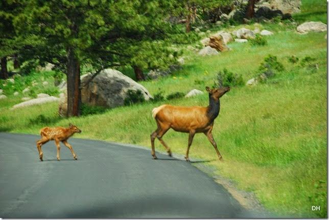 06-22-14 A RMNP Moraine Park (12)