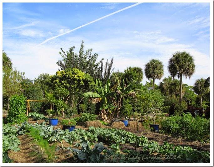 11-20-veg-garden