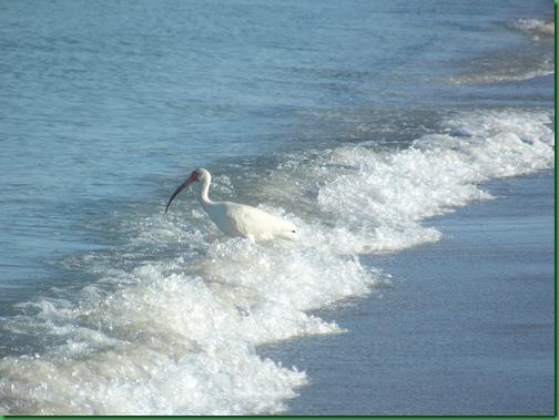Friday Nokomis Beach (63)