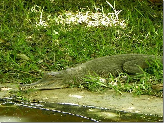 Kalimba_Reptile_Park-21_thumb