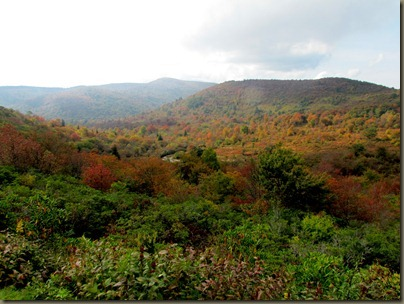 Near Graveyard Fields on Blue Ridge