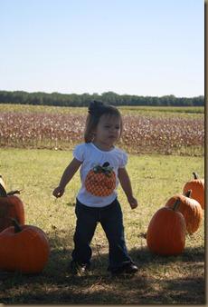 Pumpkins 052