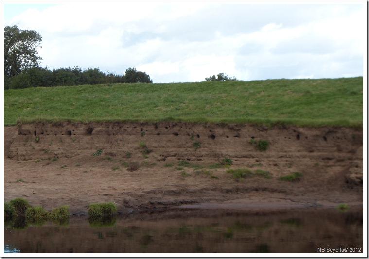 SAM_3362 Sand Martin Holes