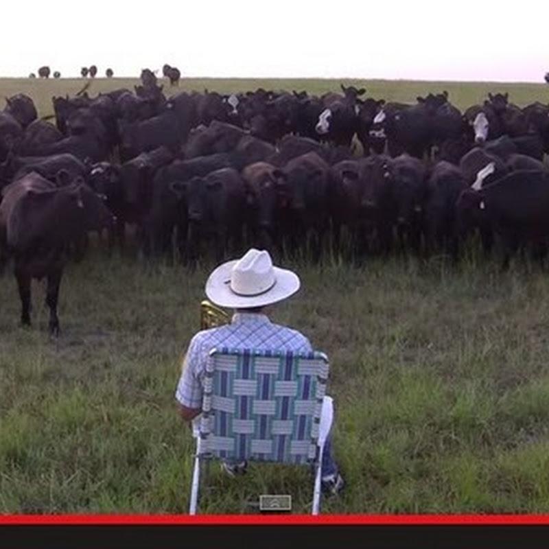 """O Derek Klingenberg  παιζει """"Royals"""" στις αγελαδες"""
