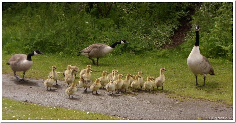 SAM_0135 Goose Creche