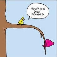 diet birds