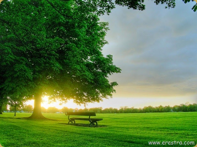 Bench_in_sunlight_12598