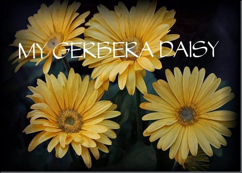 Gerbera Daisy copy