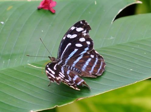 2013-07-05 butterfly pavilion (81)